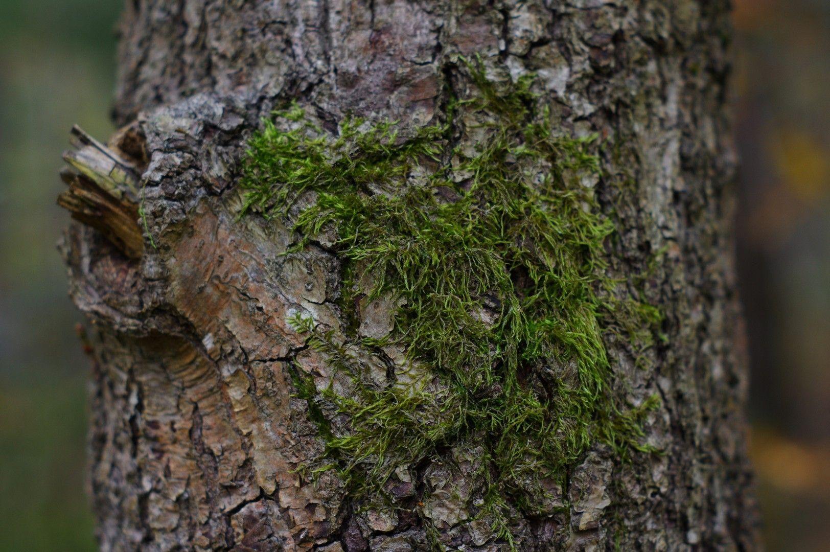 Skog (1).JPG