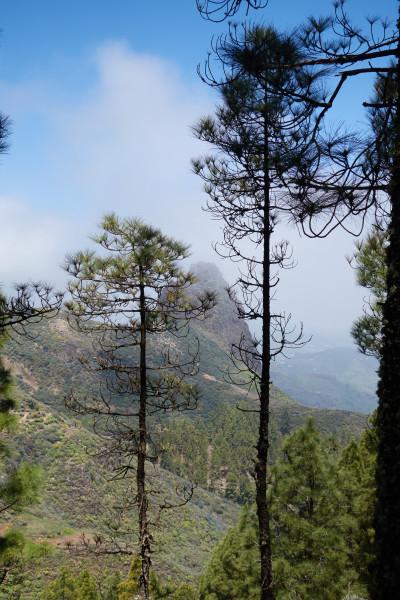 Utsikten strax innan Caldera los Marteles