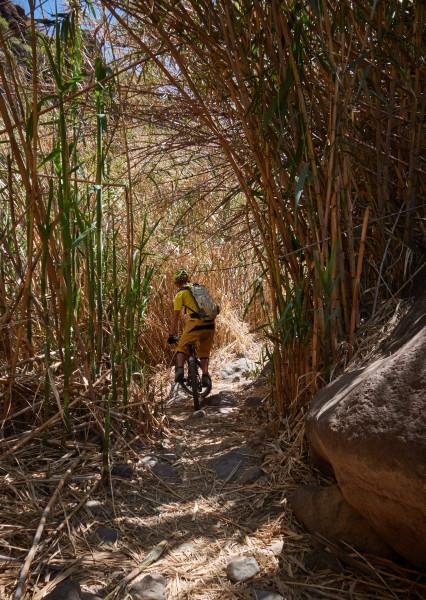 Marran i cyklingsbar bambudjungel